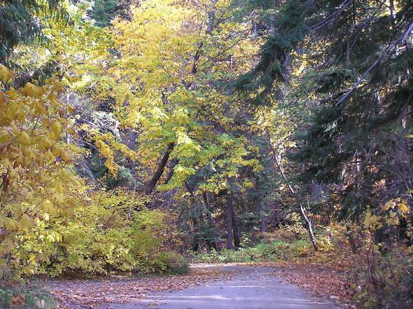 Autumn Photographs Art Print featuring the photograph Autum Colors by Louise Magno