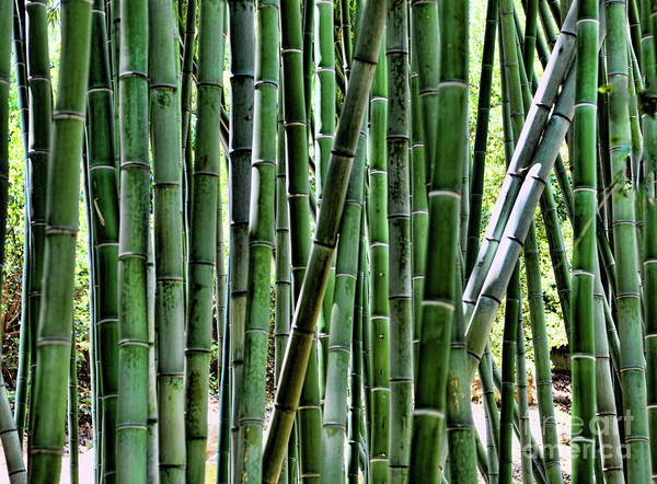 Cactus Art Print featuring the photograph Bamboo by Chuck Kuhn