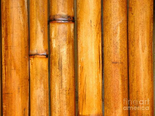 Background Print featuring the photograph Bamboo Poles by Yali Shi