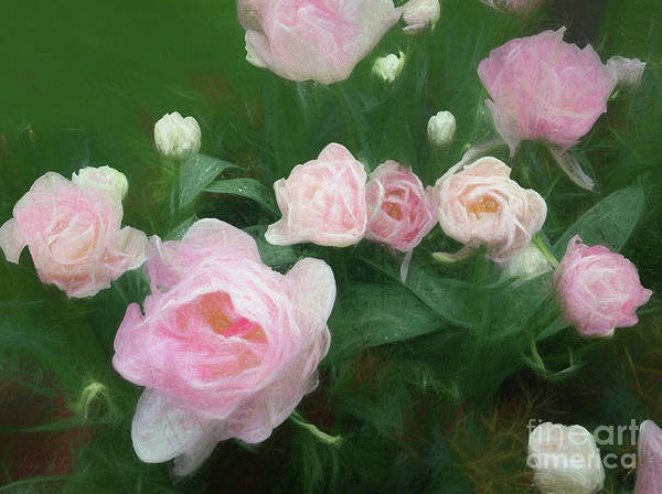 Pink Art Print featuring the mixed media Bed Of Roses by Helen White