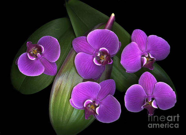 Purple Art Print featuring the photograph Bees On Green by Christian Slanec