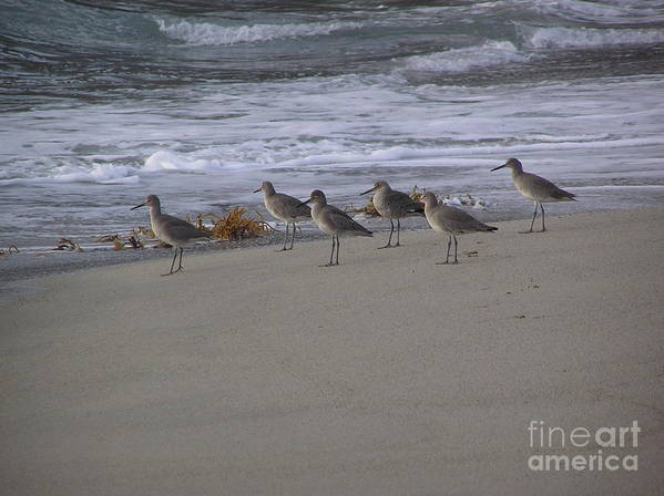 Birds Art Print featuring the photograph Bird Walk by Louise Magno