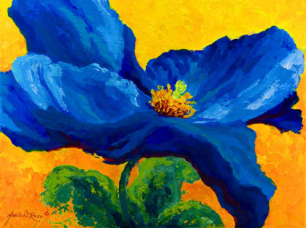 Poppies Print featuring the painting Blue Poppy by Marion Rose