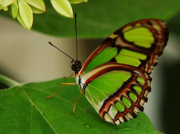 Butterfly Art Print featuring the photograph Butterfly 2 by Scott Gould