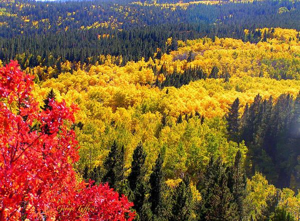 Colorado Autumn Fall Colorful Rocky Mountains Gold Aspen Peak To Peak Art Print featuring the photograph Colorado Autumn by George Tuffy