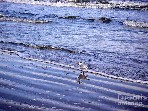 Nature Art Print featuring the photograph Creatures Of The Gulf - Seaing And Wading by Lucyna A M Green