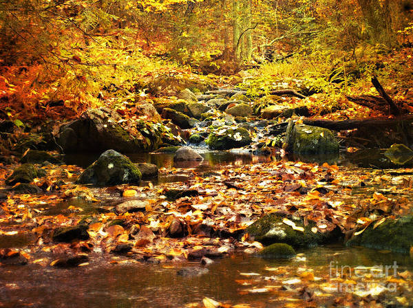 Fall Photographs Art Print featuring the photograph Creek In The Woods by Kathy Jennings