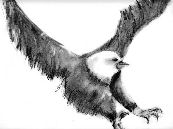 Eagle Art Print featuring the drawing Eagle In Flight by Marilyn Barton