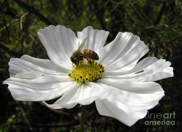 Flowers Art Print featuring the photograph f21 by Tom Griffithe