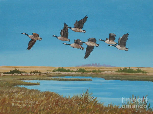 Canada Geese Art Print featuring the painting Follow The Leader by Diane Ellingham