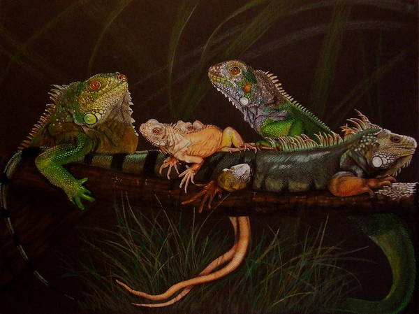 Iguana Print featuring the drawing Full House by Barbara Keith