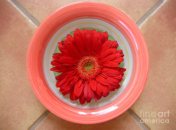 Nature Art Print featuring the photograph Gerbera Daisy - Bowled On Tile by Lucyna A M Green