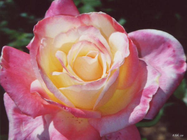 Art Print featuring the photograph Glorious Pink Rose by Heather Kirk