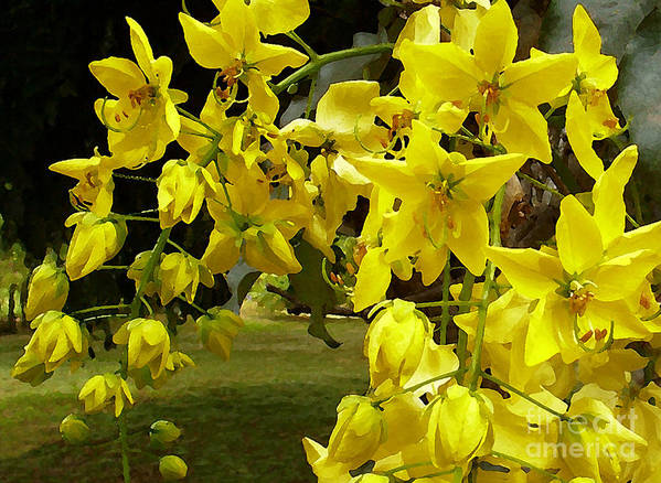 Yellow Shower Tree Art Print featuring the photograph Golden Shower Tree by James Temple