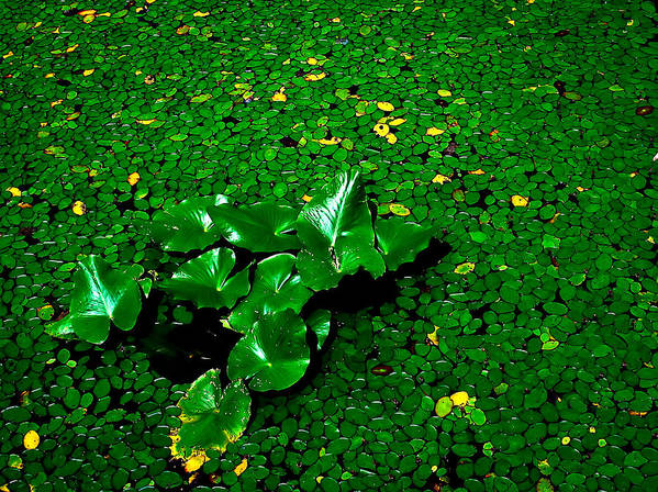 Plants Art Print featuring the photograph Green On Green by Ron Plasencia