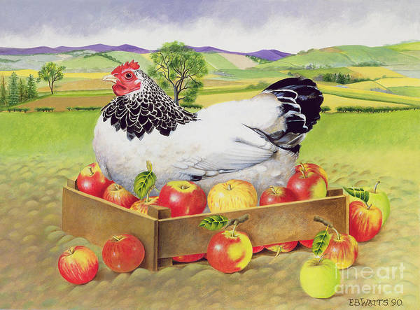 Chicken; Landscape Art Print featuring the painting Hen In A Box Of Apples by EB Watts