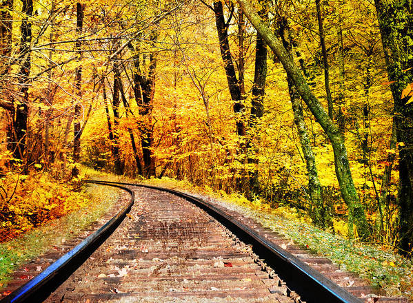 Fall Art Print featuring the photograph Into The Forest by Kathy Jennings