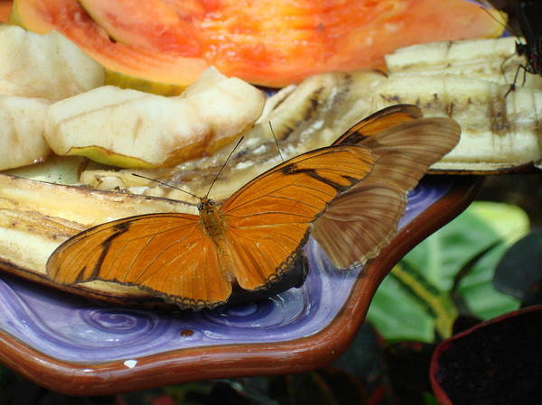 Butterfly Art Print featuring the photograph Lunch Time by Robyn Leakey