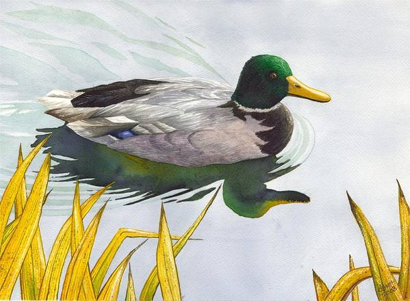 Duck Art Print featuring the painting Mallard by Catherine G McElroy