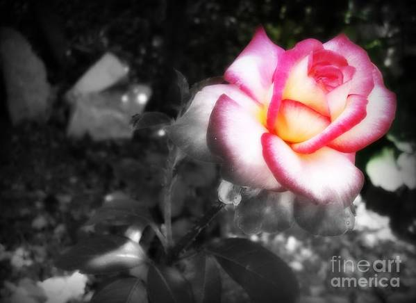Black And White Art Print featuring the photograph Mi Rosa by Linda De La Rosa
