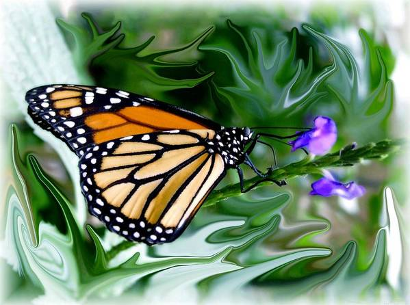 Monarch Butterfly Art Print featuring the photograph Monarch Butterfly 4 by Jim Darnall