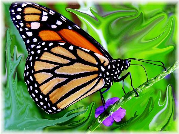 Monarch Butterfly Art Print featuring the photograph Monarch Swirl 1 by Jim Darnall