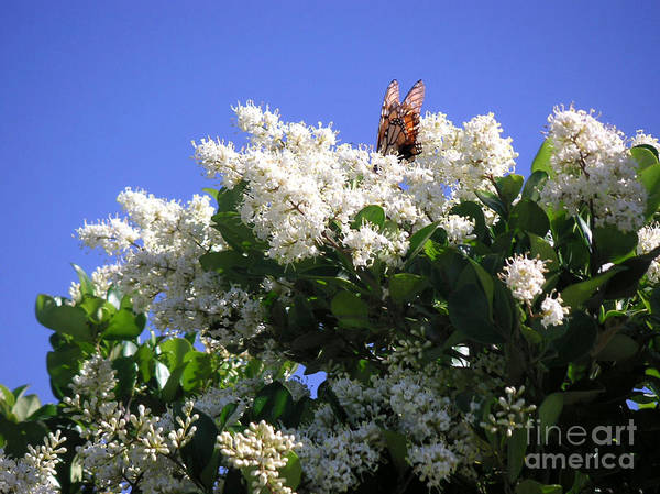 Nature Art Print featuring the photograph Nature In The Wild - Bathing In Blooms by Lucyna A M Green