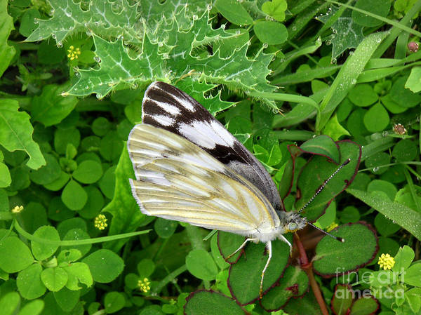Nature Art Print featuring the photograph Nature In The Wild - Visiting With The Greens by Lucyna A M Green