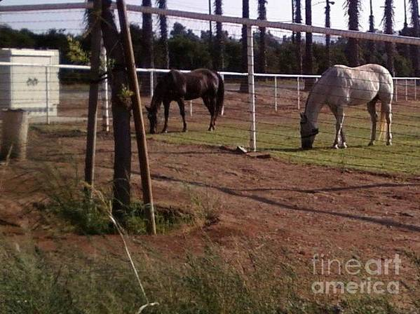 Horses Art Print featuring the photograph Neighbors by Jamey Balester