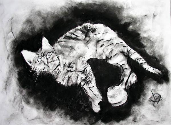Kitten Art Print featuring the drawing Olive by Brad Wilson