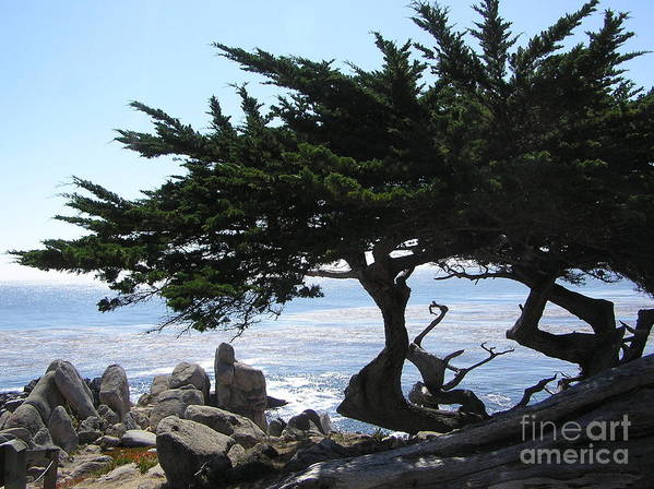 Seascape Art Print featuring the photograph Pacific Cypress View by Richard Mansfield