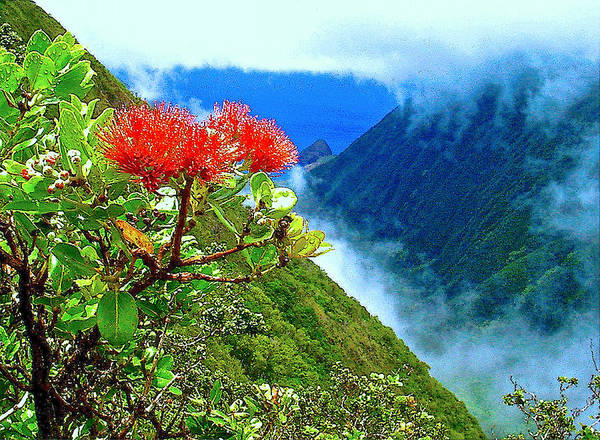 Ohia Lehua Art Print featuring the photograph Peles Flower by James Temple