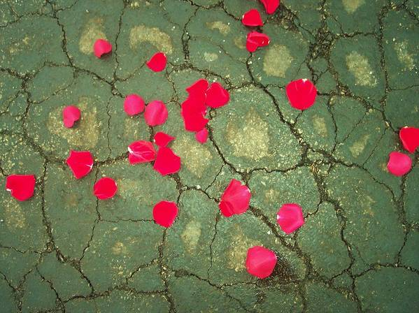 Red Rose Petals Asphalt Abstract Flowers Print featuring the photograph Petals On Asphalt by Anna Villarreal Garbis