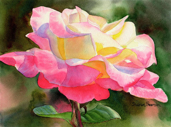 Pink Rose Art Print featuring the painting Princess Diana Rose by Sharon Freeman