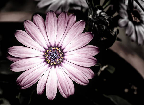 Flower Art Print featuring the photograph Purple Flower by Al Mueller