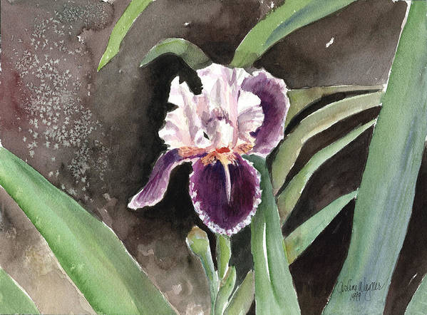 Flower Art Print featuring the painting Purple Iris by Arline Wagner