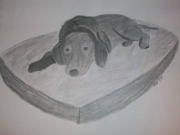 Dog Art Print featuring the drawing Resting Dog by Kristen Hurley