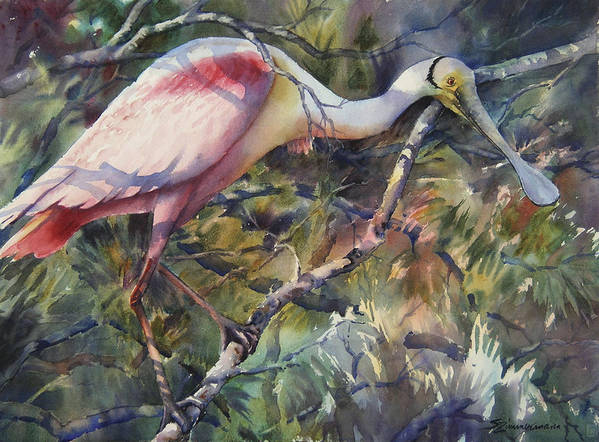 Roseate Spoonbill Art Print featuring the painting Roseate Spoonbill by Sue Zimmermann