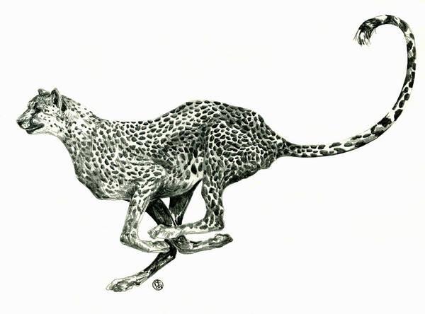 Nature Art Print featuring the drawing Running Cheetah by Shirley Heyn