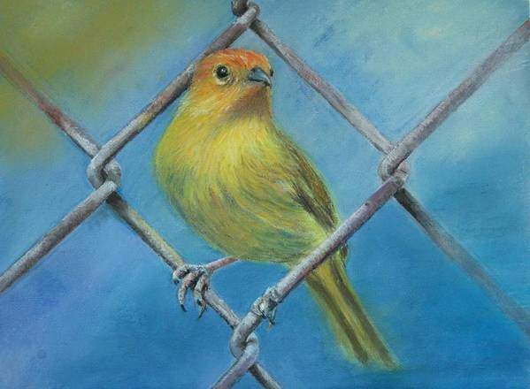 Bird Art Print featuring the painting Safron Finch by Ceci Watson