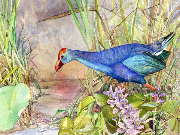 Wildlife Art Art Print featuring the painting Scooting Coot - Purple Swamphen by Sasitha Weerasinghe