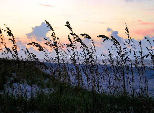 Sea Oats Print featuring the photograph Sea Oats Silhouette by Kristin Elmquist