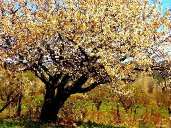 Landscape Art Print featuring the photograph Spring Comes To The Old Cherry El Valle New Mexico by Anastasia Savage Ealy