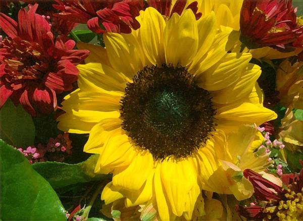 Sunflower Art Print featuring the photograph Sunflower Boquet by Jim Darnall