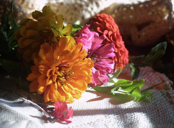 Flowers Art Print featuring the photograph Taking The Sun by Mary J Hicks