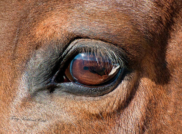 Equine Art Print featuring the photograph The Equine Eye by Terry Kirkland Cook
