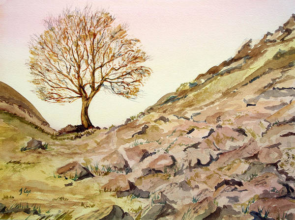 Sycamore Gap. Roman Wall Art Print featuring the painting The Lone Sentry-sycamore Gap. by John Cox