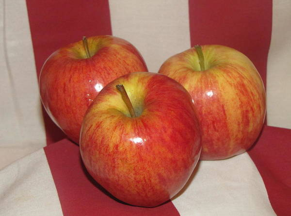 Apple Art Print featuring the photograph Threes Company by Don Howard