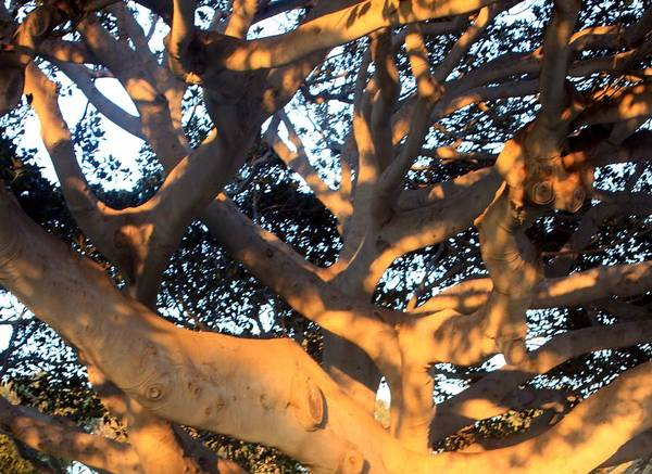 Tree Art Print featuring the photograph Tree Tangle 0551 by Edward Ruth