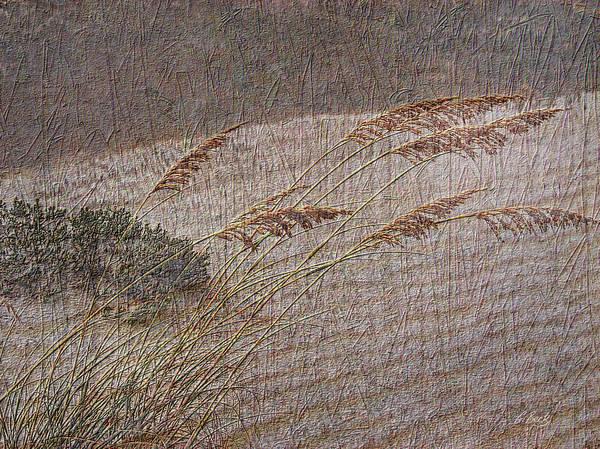 Beach Sea Oats Sand Botany Botanical Stormy Windy Gordon Beck Art Art Print featuring the photograph Windswept by Gordon Beck